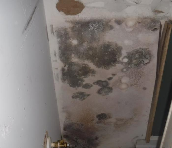 Mold Remediation Project in Ft. Myers  Before