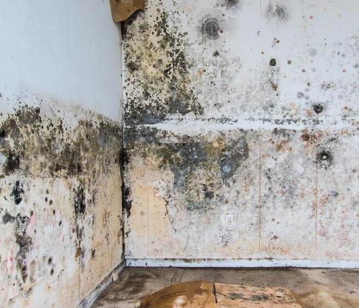 Mold Remediation Beginners Guide to Cleaning Small Areas of Mold