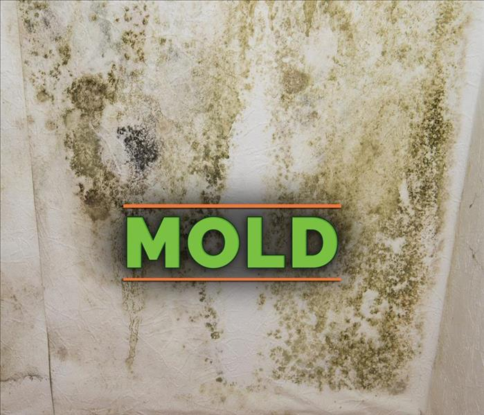 Mold Remediation A Homeowner's Guide to Mold and Mildew