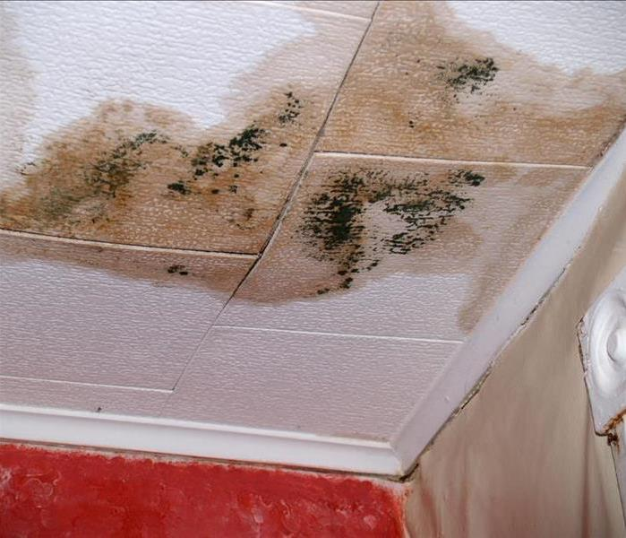 Mold Remediation The Right Way to Go About Mold Remediation and Removal
