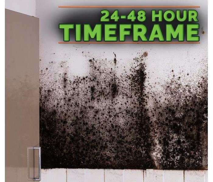 Mold Remediation How To Tell the Difference Between Mold and Mildew