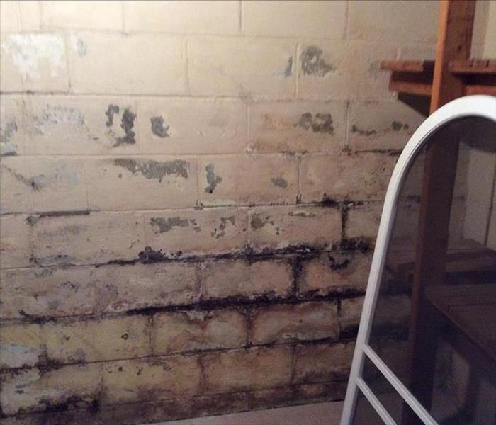 Mold on a basement wall